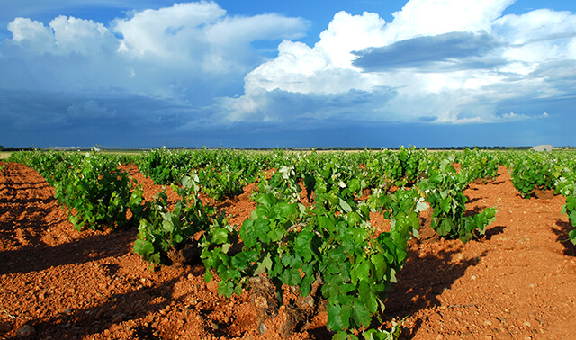Meet Spain's best young wine from Bodegas Campos Reales